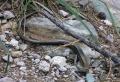 2014ago1-10-Route_Nazionale_(selez)_(071)_(FILEminimizer)