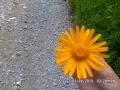 2014ago1-10-Route_Nazionale_(selez)_(075)_(FILEminimizer)